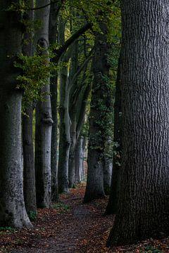 Baumreihe auf der Veluwe von Kelvin Middelink