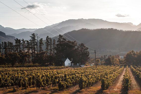Vineyards, Franschhoek, South Africa van Mark Wijsman