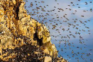 Massenstart am Vogelfelsen