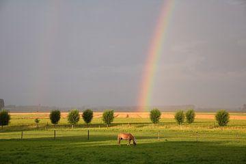 Regenboog in het veld von Robbert Van' t Noordende