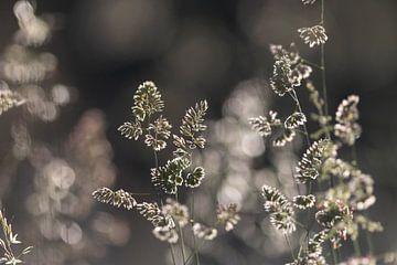Gras im Sonnenlicht von Thomas Heitz
