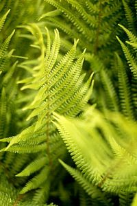 Botanisches Design, grüne Farne, Kunst Natur Foto von Karijn | Fine art Natuur en Reis Fotografie