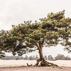 Vlieg den op zandverstuiving van Mayra Pama-Luiten