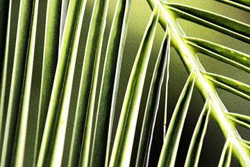Abstracte foto van bladeren van Heleen van de Ven