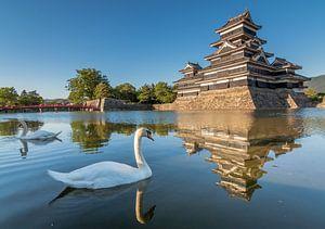 Zwanen bij het Matsumoto kasteel in Nagano (Japan). van Claudio Duarte