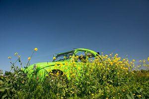 Zomer Eend Groen van Frank Hensen
