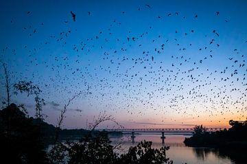 Foto gemaakt tijdens de uitvlucht van vleermuizen bij de batcave in Hpa-An in Myanmar van Twan Bankers