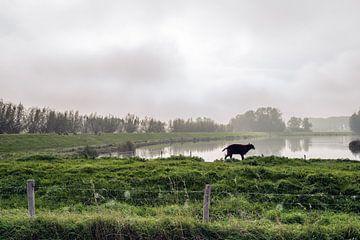 Als er één schaap over de dam is, volgen er meer van Ruud Morijn