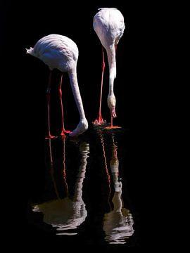 Zwei Flamingos in Reflexion von Karin aan de muur