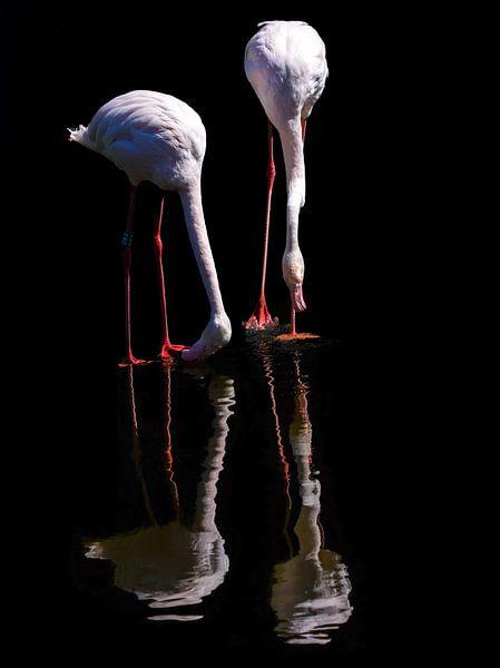Twee Flamingo's in reflectie van Karin aan de muur