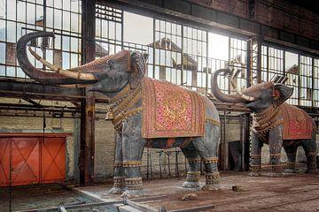 verlassene Elefanten in einer Halle von Kristof Ven