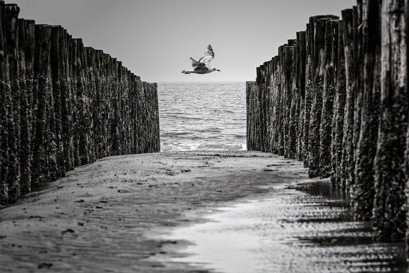 Zeemeeuw tussen golfbrekers van René van der Horst