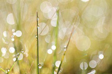 Gräser von Jana Behr