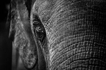 Nahaufnahme eines Elefanten von Chihong