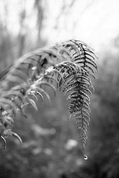 Blätter eines Farns mit einem Tropfen Regenwasser von Evelien Oerlemans