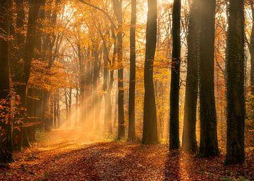 Herbstallee von Thomas Jansen