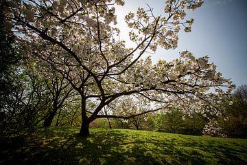 Bloesems aan de bomen van Charelle Roeda