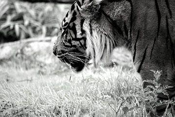 Der denkende Tiger von Carlijn van Gerrevink