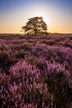 Sonnenaufgang an der Regte Heide in Brabant von Evelien Oerlemans