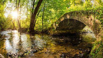 Bos met beekje en oude brug van Günter Albers