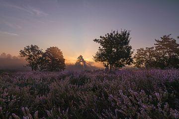 Magischer Sonnenaufgang mit Solarharfen durch die Bäume und einer blühenden Heide. von Debbie Kanders