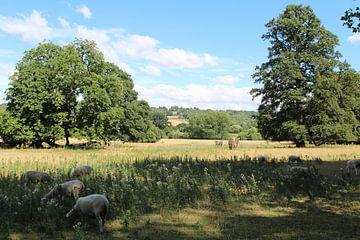 Lacock rural sur Photographico Magnifico