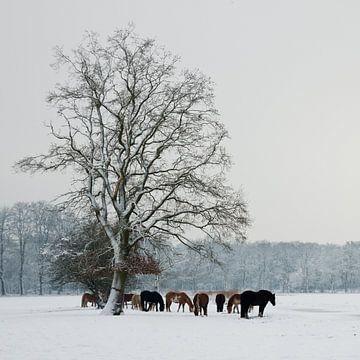 Paarden in Sneeuw van Harld Roling
