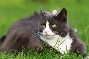 Obesicat in de lente met bloem