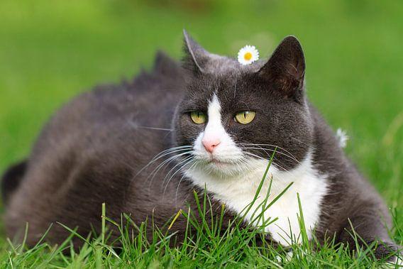 Obesicat in de lente met bloem van Dennis van de Water