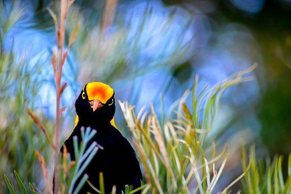Geelnekprieelvogel van Victor Droogh