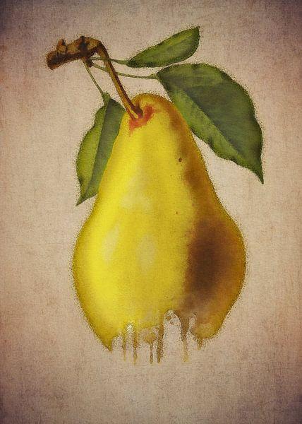 Birne - Antike Zeichnung einer Birne von Jan Keteleer