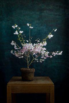 Bloeiende prunus van Remke Spijkers