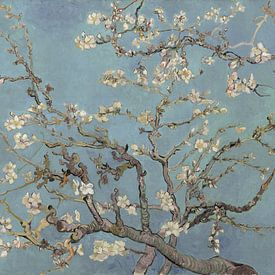Amandelbloesem van Vincent van Gogh (zacht blauw/early dew)  sur Meesterlijcke Meesters