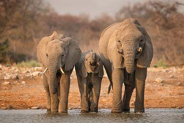 Drinkende Afrikaanse Olifanten van Michael Kuijl