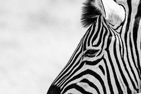 Zebra van Leendert van Bergeijk