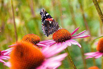 Morena's geheime tuinen : Atalanta vlinder 1 van Morena 68