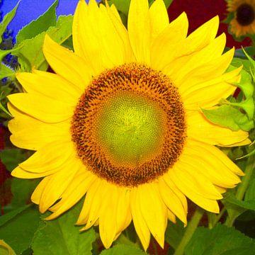 Sonnenblume von Ramon Labusch