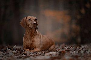Hond in het bos van Nanda Jansen