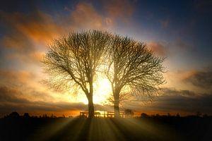 Sonnenaufgang Bäume im Naturschutzgebiet Lentevreugd