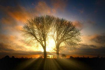 Zonsopkomst bomen in natuurgebief Lentevreugd van Wim van Beelen
