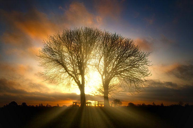 Sonnenaufgang Bäume im Naturschutzgebiet Lentevreugd von Wim van Beelen