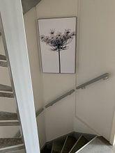 Kundenfoto: Karottenblüten von Martine Affre Eisenlohr, auf akustische wandbilder