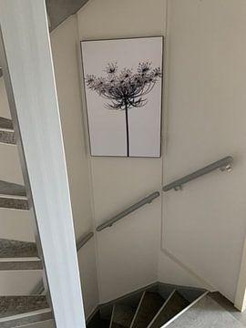 Kundenfoto: Karottenblüten von Martine Affre Eisenlohr