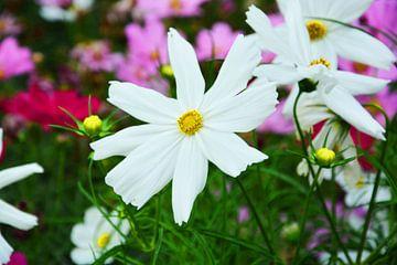 witte bloemen von Gerrit Neuteboom