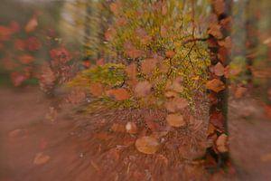 Hefst speciaal van Detty Verbon