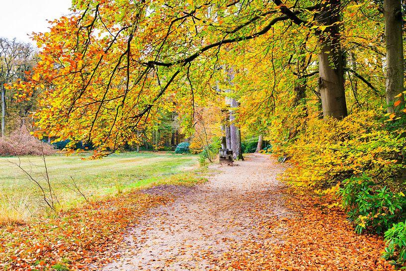 Twents bos met pad in herfst van Ben Schonewille