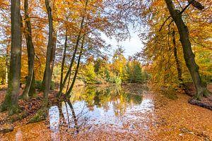 Bosvijver bedekt met bladeren van beukenbomen in herfst van