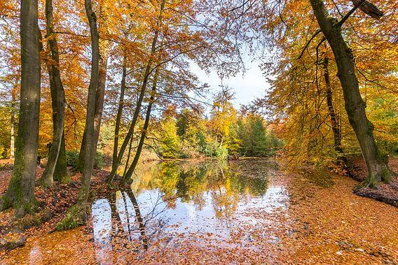 Bosvijver bedekt met bladeren van beukenbomen in herfst