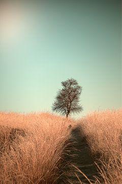 Gras en Path, Jaap van den van 1x