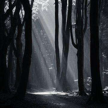 Speulderbos Sonnenstrahlen schwarz-weiß von Vincent Fennis